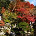 庭園の紅葉